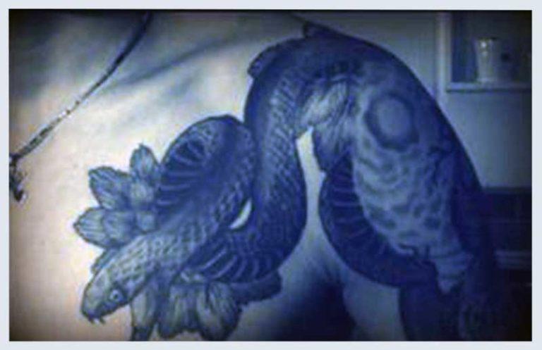 Snakes Tattoo Designs for men