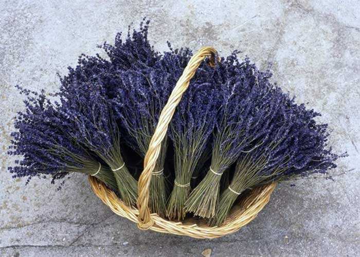 12 Lavender Beauty Recipes