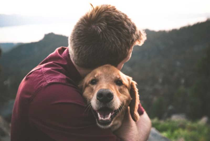 CBD for Dogs and All Your Pets