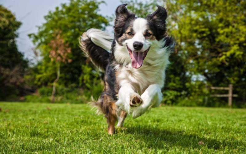 Will CBD Oil Help My Dogs Joint Pain? | CBD oil