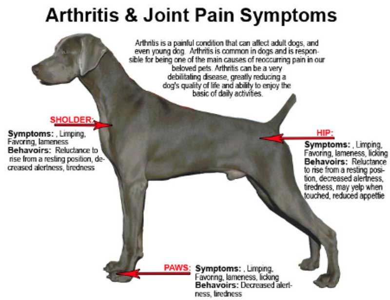 Will CBD Oil Help My Dogs Joint Pain