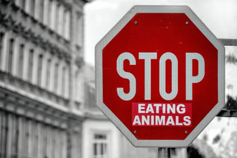 How Can Hemp Benefit Vegan