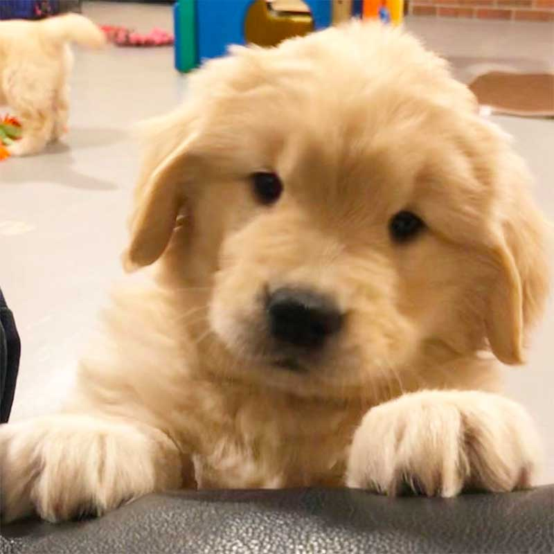Puppy Training Tips : Keep Your Dog Healthy