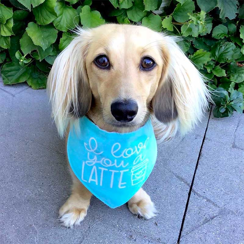 Pet Accommodation Facilities Provide Pet Training