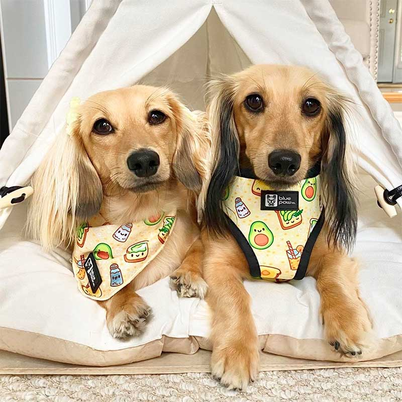 Pet Accommodation Facilities are Better Than Traditional Pet Daycare Centres