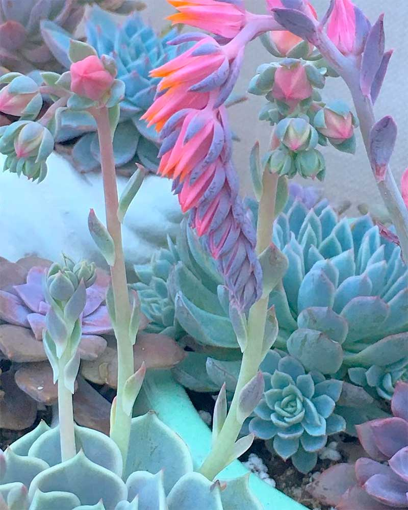 What is a Succulent Plant