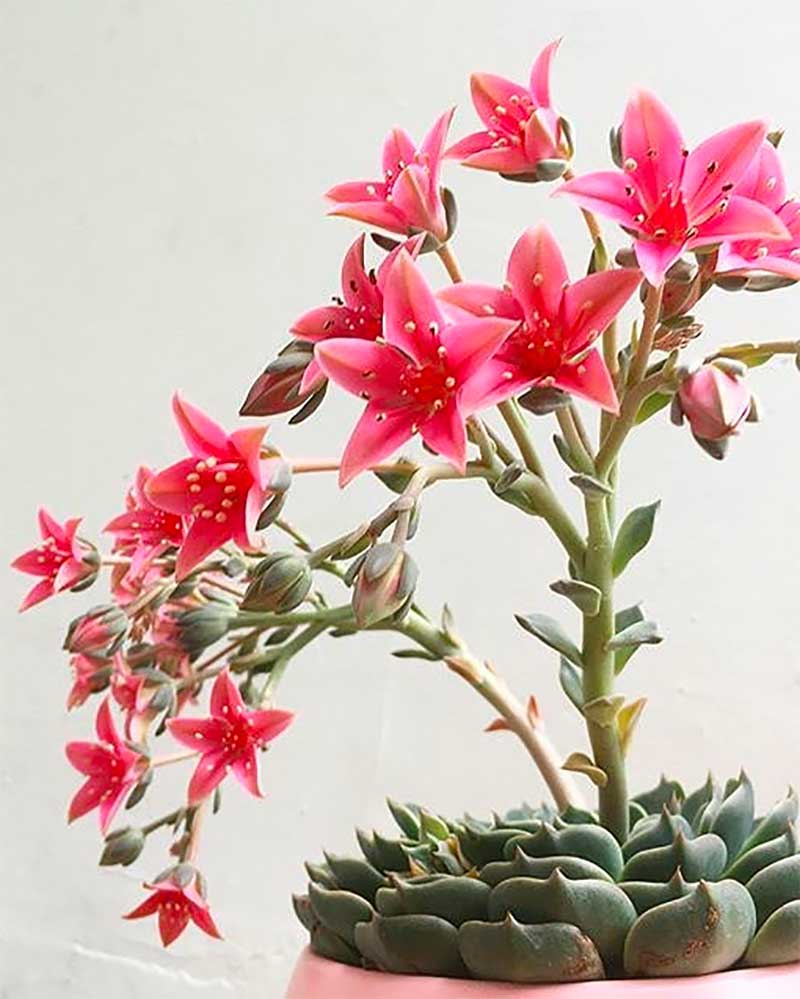 What to look for when buying succulents online
