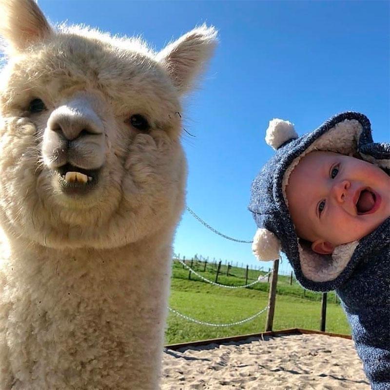 Alpaca Wool – The New Luxury