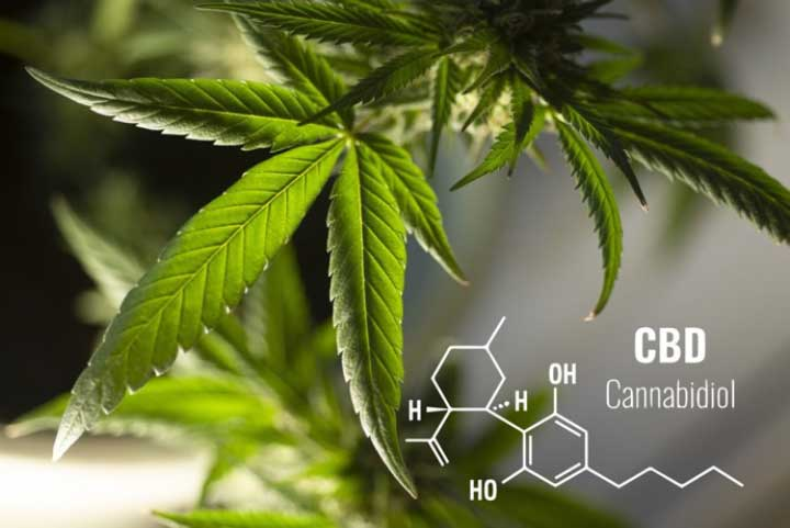 Can You Build Up a CBD Tolerance? Top Tips on How to Avoid It