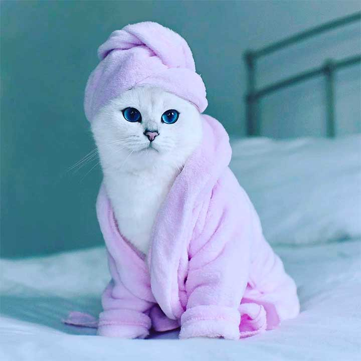 10 Cats Who Wear Human Clothes Better Than You