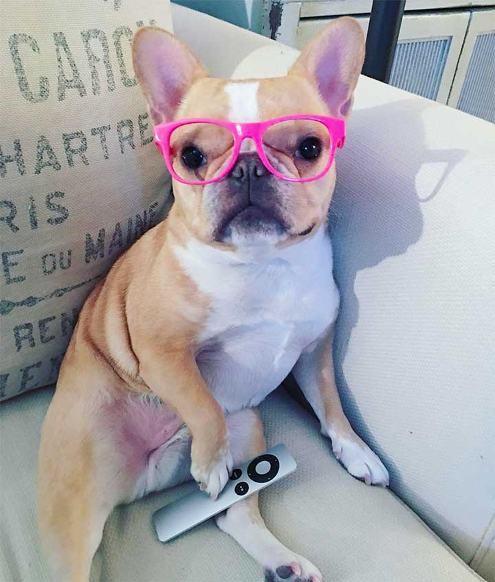 11 Fashionable Instagram Dogs For National Puppy Day