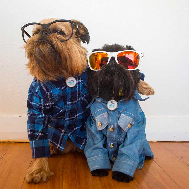 Instagram's Most Fashionable Dogs