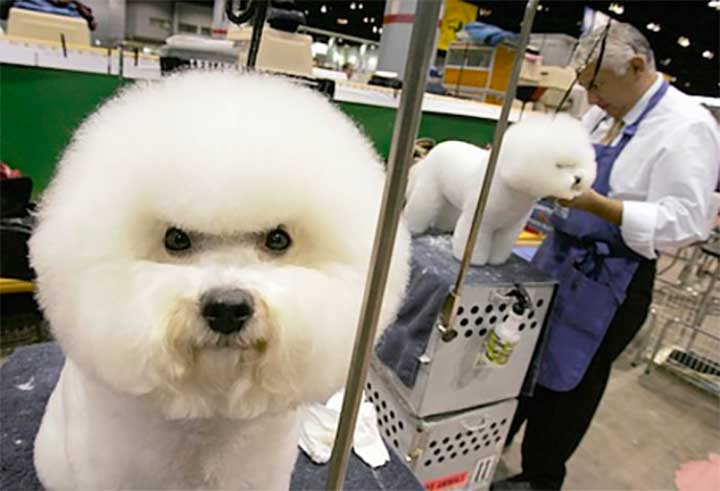 Dogs With Better Hairstyles: Dog Afro