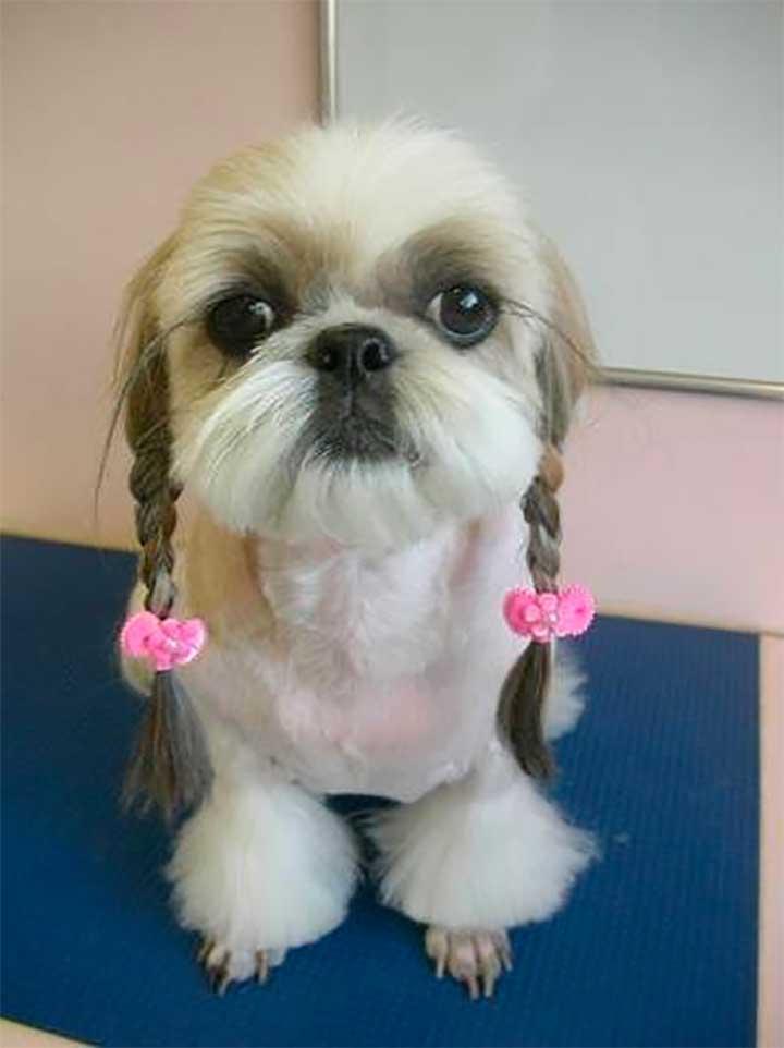 Dog Braids Pink Bows