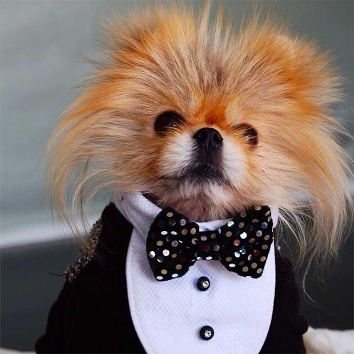 Fashionable Dog Breeds
