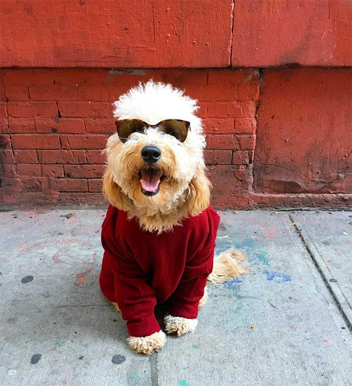 Fashionable Dogs To Follow On Instagram