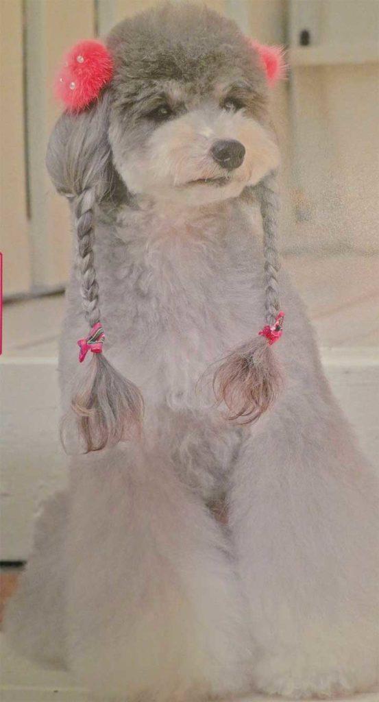 Grey Dog Braids Pink Clips