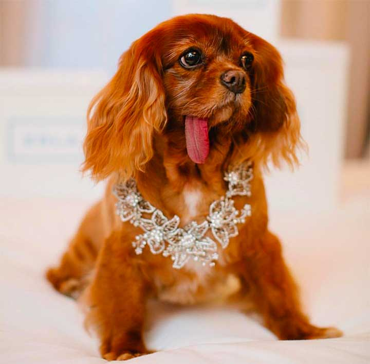 Images for the Most Fashionable Dogs on Instagram, in Honor of National Puppy Day