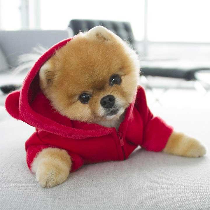 trendy dog clothes