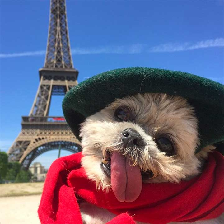 11 Best-Dressed Dogs To Follow On Instagram