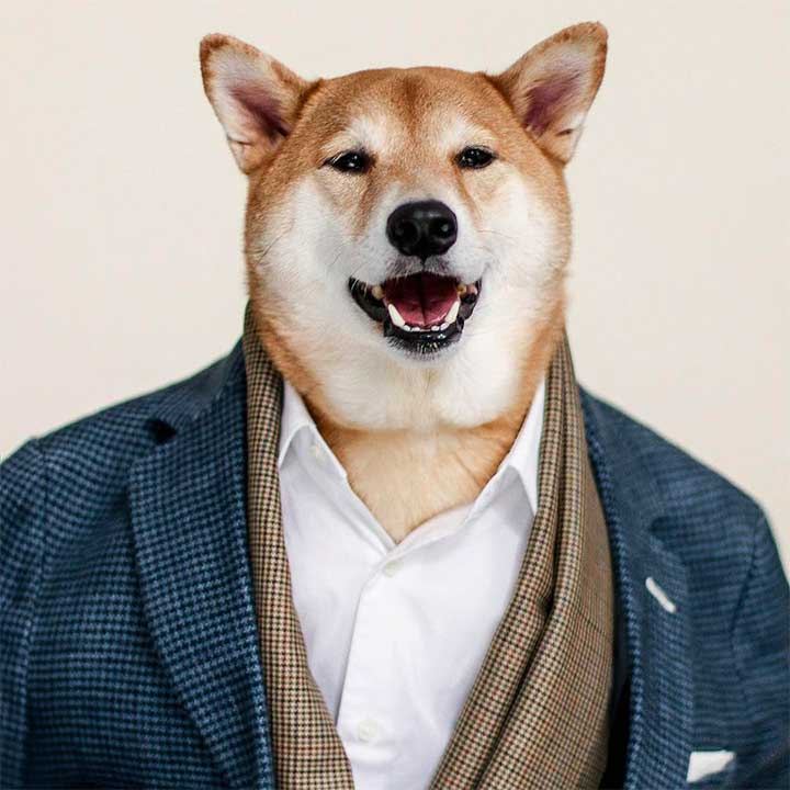 Most Fashionable Dogs on Instagram: Menswear Dog