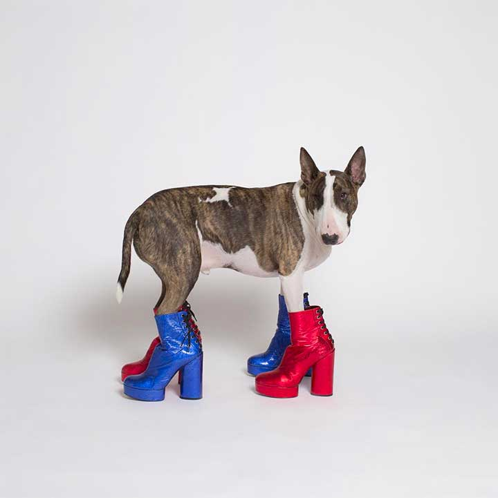 Most Fashionable Dogs on Instagram: Neville Jacobs