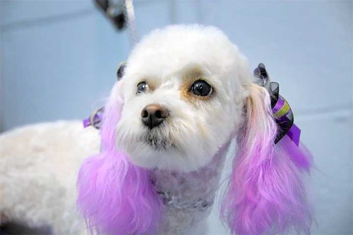 Purple Ombre Dog Hair