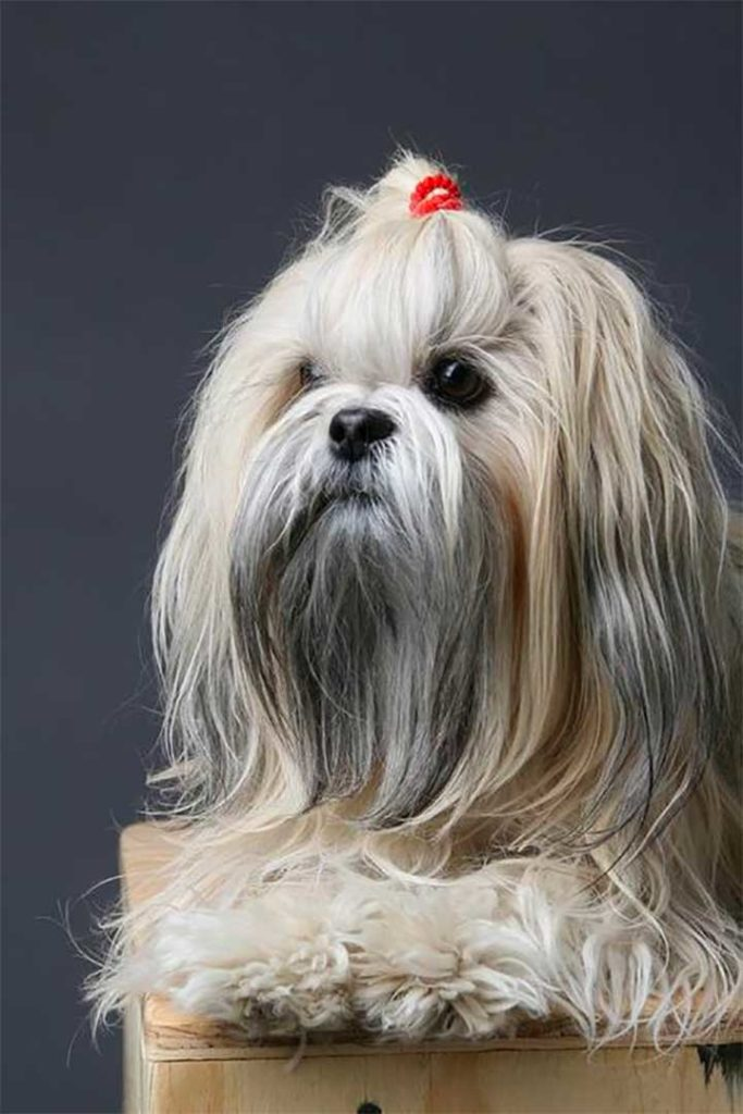 15 Dogs With Better Hairstyles Than You: White Dog Dreadlocks