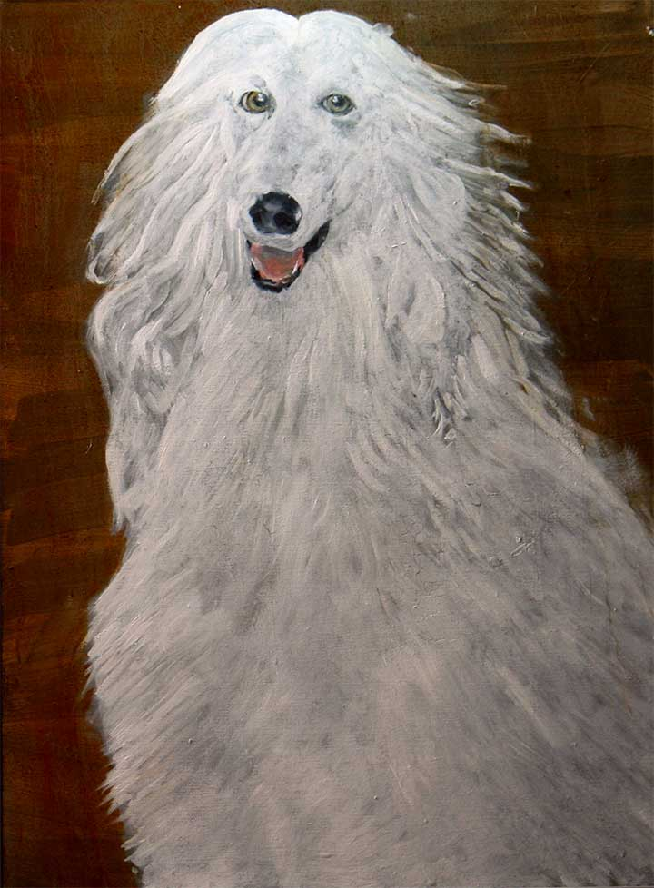 Dogs With Better Hairstyles: White Dog