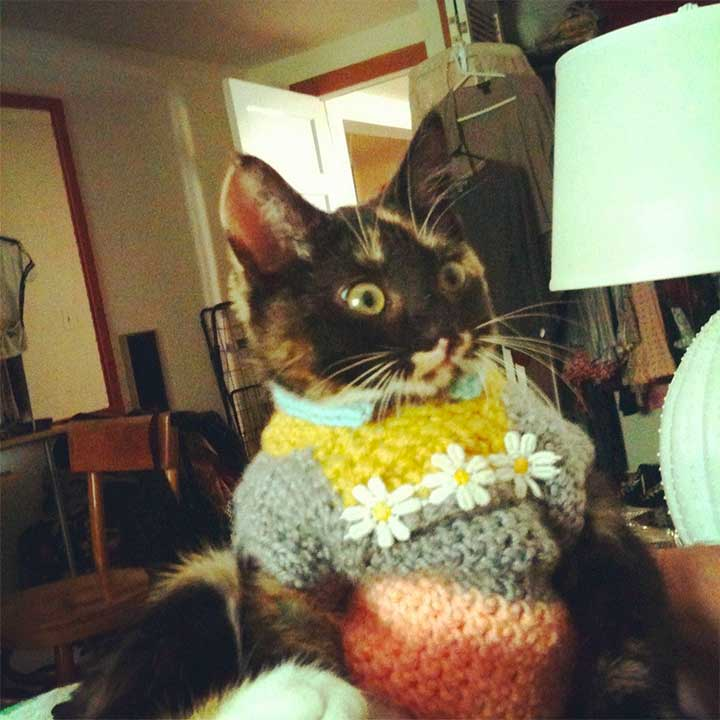 cat looking scared of its sweater