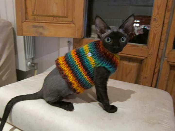 cat wearing a knit sweater