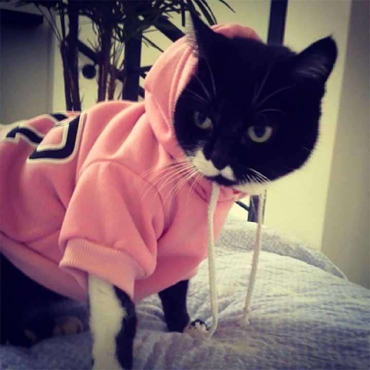 cat wearing a pink sweatshirt