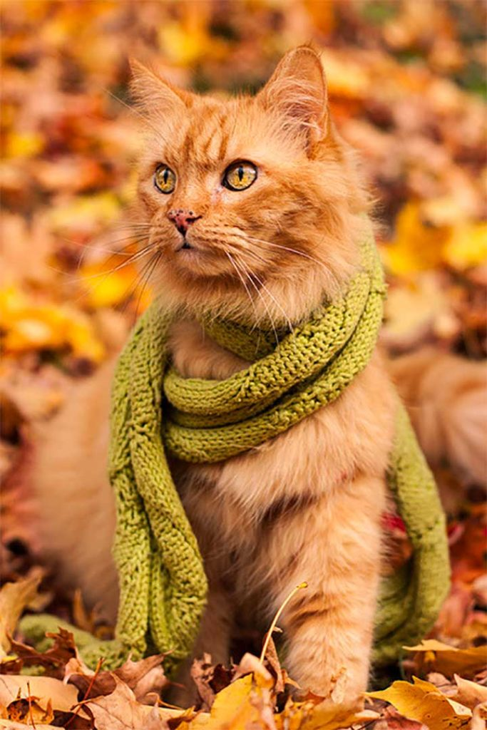 cat with a green scarf