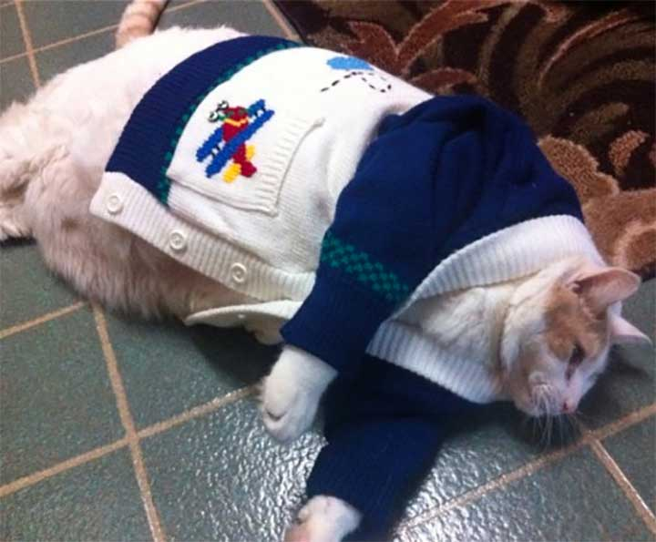 A collection of cats in costume, kitties wearing clothes, and other feline anthropomorphism!