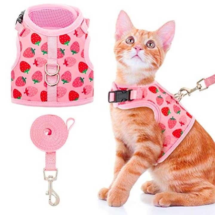 fashionable cat on a leash