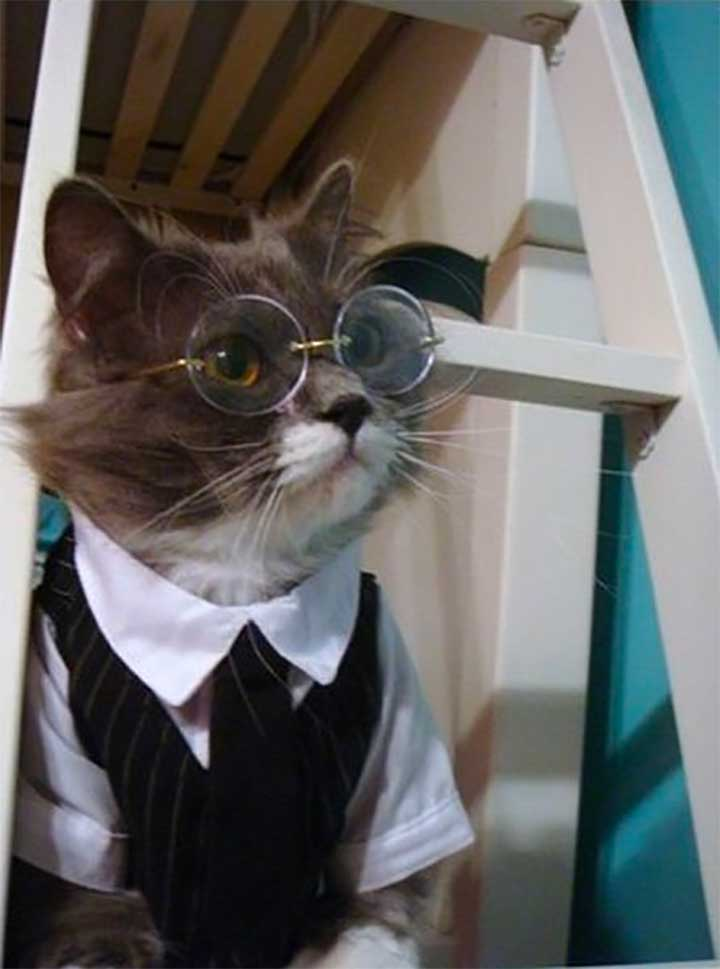 tuxedo cat wearing clothes