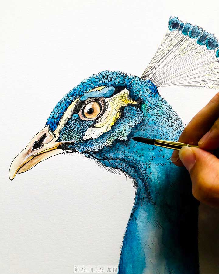 Peacock Tattoo Meaning