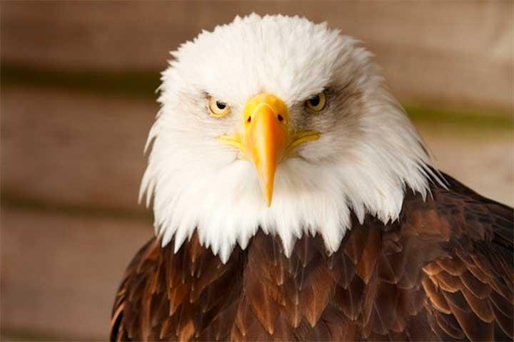 14 Political Tattoos To Celebrate Election Day: bald eagle